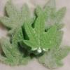 Buy Green Sweet Leaf